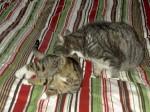 katt2