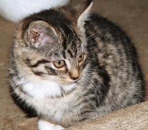 kattungen1